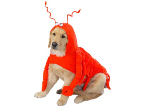 Casual Canine Lobster Paws Dog Costume, Large (fits lengths up to 20″), Red-Orange, My Pet Supplies