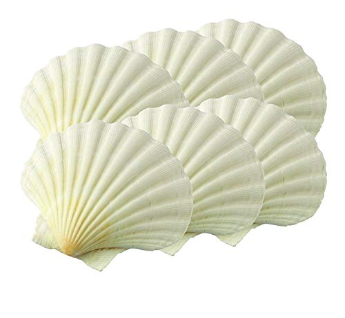 - Akkapeary Set of 6 Natural King Scallop Baking Shells, 3 ¼ inch Bakeware Serving Food Safe For Microwave Oven Under The Broiler On the grill Seafood Dish Dishwasher Safe