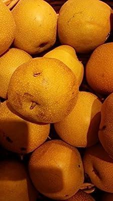 (5 gallon) Dwarf, Shinko Asian Pear Tree-crisp, refreshingly sweet flavor