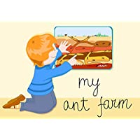 Live Ant Resupply Kit for Ant Farms, FREE Shipping! FAST Delivery!