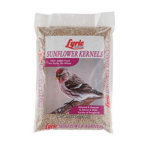 Lyric 2647445 Sunflower Kernels - 5 lb. (Best No Waste Bird Seed)