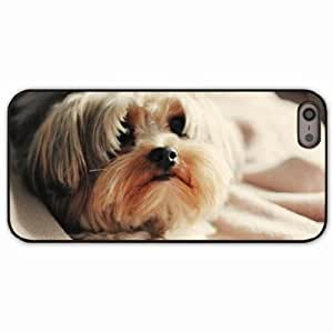 iPhone 5 5S Black Hardshell Case yorkshire terrier dog puppy Desin Images Protector Back Cover by runtopwell