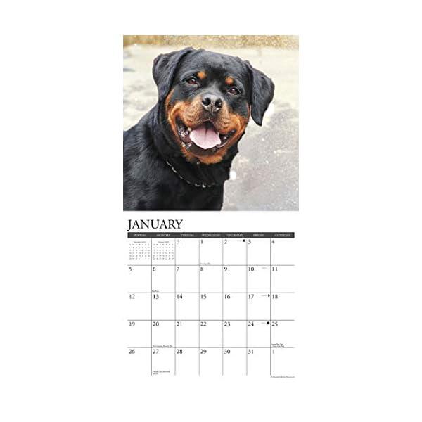 Just Rottweilers 2020 Wall Calendar (Dog Breed Calendar) 2