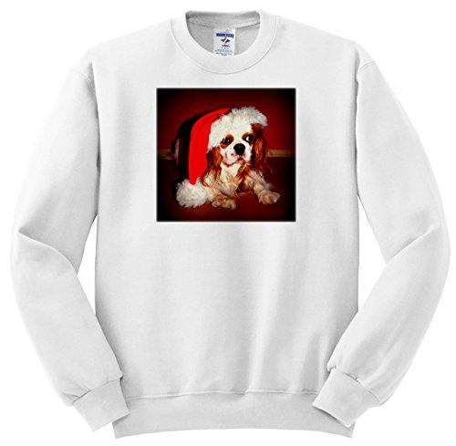Dogs - Cavalier King Charles Spaniel - Sweatshirts - Youth Sweatshirt Med(10-12) ()