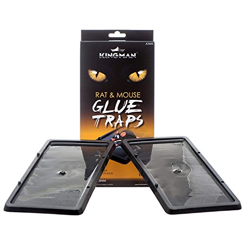 KINGMAN Mouse Trap Rat Trap Glue Trap/Board (Large Size) (5 Pack / 10 Traps) Rodent Trap Safe Easy Non-toxic (Best Mouse And Rat Traps)