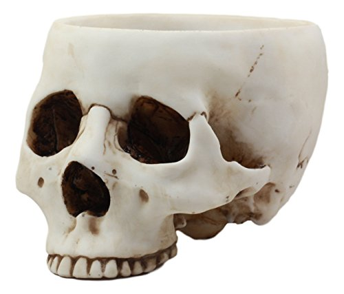 Ebros Gift Day of The Dead Bone Skull Bowl Figurine 6.75