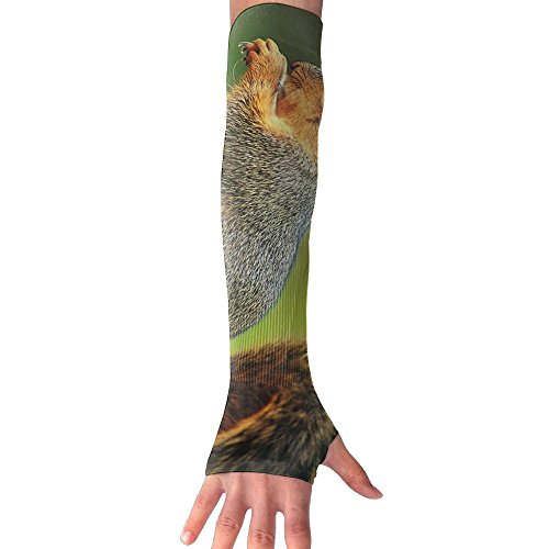- FTRGRAFE Playful Squirrel Eat Unisex Anti-UV Arm Long Sleeves Gloves Cover,Sense Of Ice Sunscreen Protection Cooling Cuff Gloves For Outdoor Sports-1 Pair
