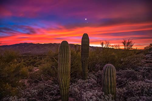 Southwest Photography Wall Art Print - Picture of Saguaro Cactus with Venus and Jupiter Above During Incredible Sunrise Near Tucson Arizona Sonoran Desert Decor 5x7 to 40x60
