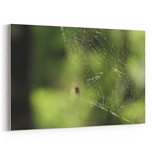 (Westlake Art - Spider Macro - 12x18 Canvas Print Wall Art - Canvas Stretched Gallery Wrap Modern Picture Photography Artwork - Ready to Hang 12x18 Inch (D41D8))