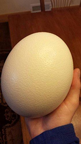 Premium Ostrich Eggshell (Ostrich Ornament)