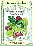 Lettuce - Gourmet Salad - Asian Baby Leaf Seeds