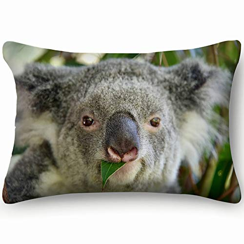 Koala Bear Australia Animals Wildlife Skin Cool Super Soft and Luxury Pillow Cases Covers Sofa Bed Throw Pillow Cover with Envelope Closure 1624 Inch (The Best Sofa Bed Australia)