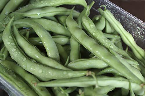 - Strike Bush - Bean Seeds - Non-GMO - 2 Ounces