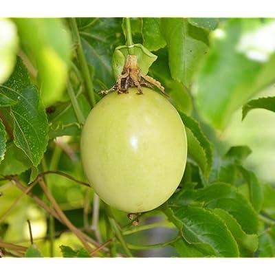 7 Seeds - Passiflora edulis var flavicarpa Yellow Passion Fruit : Garden & Outdoor