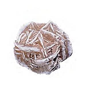Gypsum Desert Rose Mineral Crystal Rock 1.5-2 Inch w Info Card