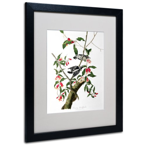 Downy Woodpecker Matted Artwork by John James Audubon with Black Frame, 16 by 20-Inch
