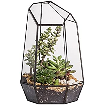 9.8inches Height Indoor Tabletop Irregular Glass Geometric Air Plants  Terrarium Box Desktop Display Planter Succulent