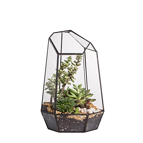 NCYP 9.8inches Height Indoor Tabletop Irregular Glass Geometric Air Plants Terrarium Box Desktop Display Planter Succulent Holder Flower Pot for Fern Moss DIY