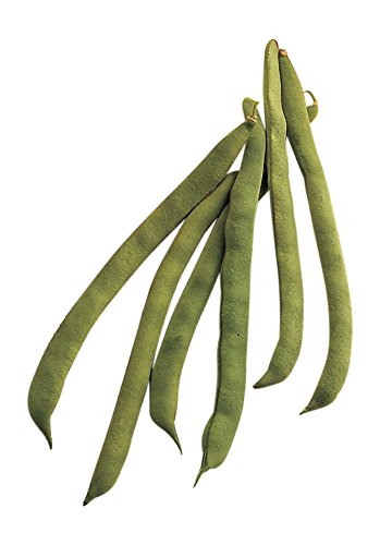 Burpee Kentucky Wonder Pole Bean Seeds 2 ounces of seed (Wonder Pole Kentucky)