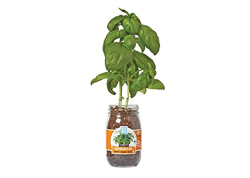 Back to the Roots Garden in A Jar, Basil]()