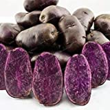 100 Pcs Purple Potato Seeds Purple Sweet Potato Delicious Nutrition Green Vegetable Seeds Home Garden NO GMO The Best Gift