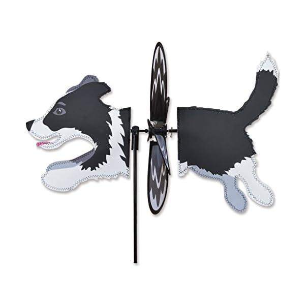 Petite Spinner - Border Collie 1