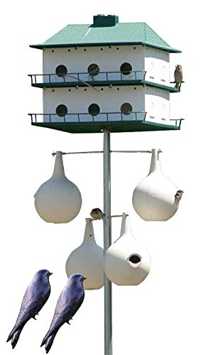 BestNest Heath 12-Room Two-Story Purple Martin House & Gourds Package