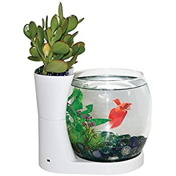 Elive betta fish bowl betta fish tank with for Betta fish tanks amazon