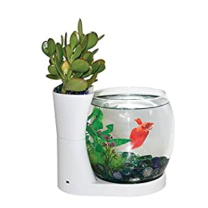 Elive betta fish bowl betta fish tank with for Fish bowl amazon