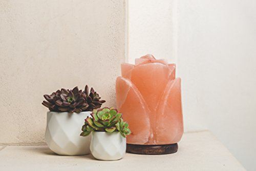 d'aplomb 100% Authentic Natural Himalayan Salt Lamp; Hand Carved Flower Rose Pink Crystal Rock Salt from Himalayan Mountains; Hand Crafted Wood Base, UL-listed Dimmer Cord; 8 lbs