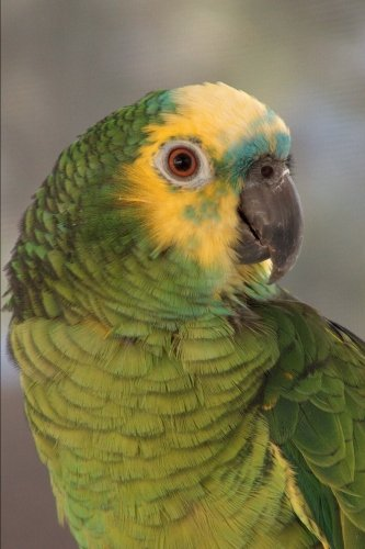 Blue-fronted Amazon Parrot Journal: 150 page lined notebook/diary