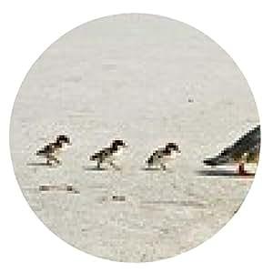 alfombrilla de ratón Pollo de agua con los polluelos - ronda - 20cm