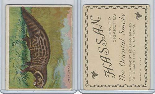 T29 Hassan Cigarettes, Animals, 1911, Civet Cat ()