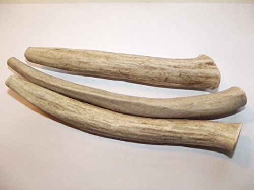 Bull Buffalo Horn (Large Antler Dog Chews, 2-pac is Now a 3-Pack 6-8 in. long,Premium Healthy antlers for Dogs Treats, by Deer Valley Dog Chews)