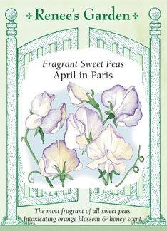 Sweet Pea - April in Paris Seeds