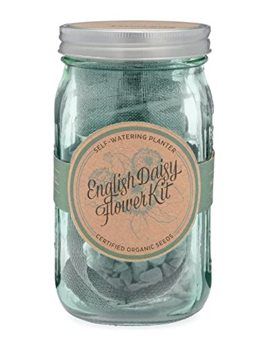 Daisy Flower Kit - Self-Watering Garden Jar - Indoor English Daisy Grow Kit By Modern Sprout