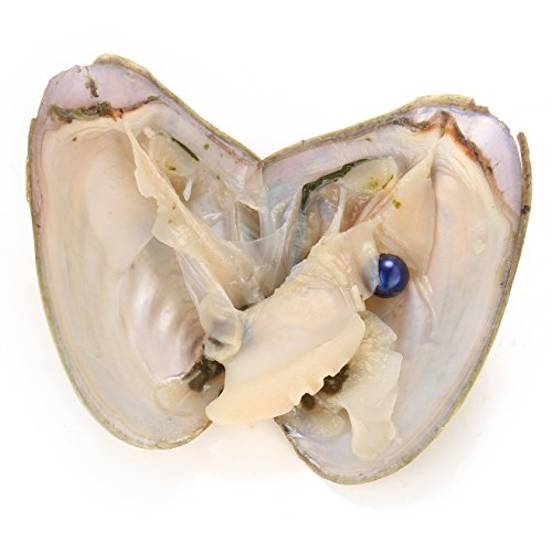 Navy Blue Freshwater Pearl - HENGSHENG 5 Pieces Freshwater Akoya Peal Oysters with Single 6.5-7 mm Nearly Round Pearl Inside (Navy)