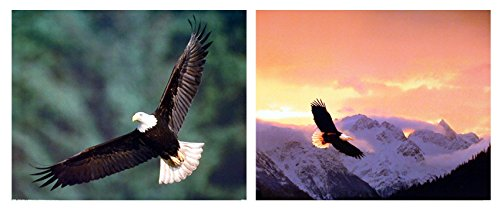 Impact Posters Gallery Flying Bald Eagle Bird Sunset Wildlife Animal Picture Two Set 16x20 Wall Decor Art Print Poster