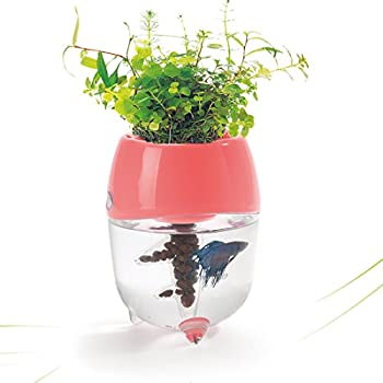 Dr. Moss Aquaponic Fish Tank Aquarium for Betta Fish with Water Garden Planter Top Lid Natural Ecosystem for Plant Growth (Pink)