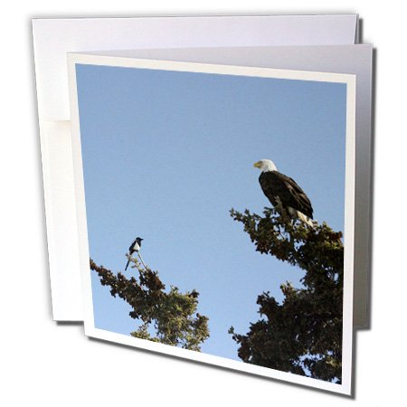 - 3dRose Magpie and Bald Eagle Having a Staring Contest - Greeting Cards, 6 x 6 inches, set of 6 (gc_57790_1)