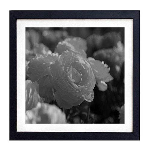 GLITZFAS PRINTS Framed Wall Art - Roses Flowers Garden Miscellaneous Loose - Art Print Black Wood Framed Wall Art Picture for Home Decoration - 16x16 (40cmx40cm) - Framed Black and White