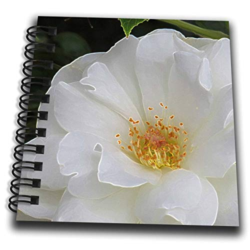 Edge Briefcase Notebook (3dRose Jos Fauxtographee- Accented Edges White Floral - A White Delicate and Pure Flower with a Yellow Center - Mini Notepad 4 x 4 inch (db_301829_3))