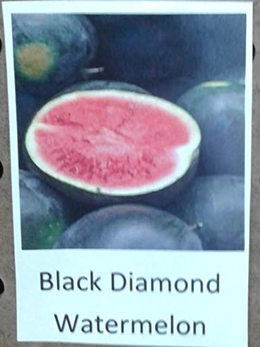 Go Garden 25 Seeds: Black Diamond Red Watermelon Seed, Garden Seed (10,25,50 Seeds Or 1 Oz. Pkt) ()