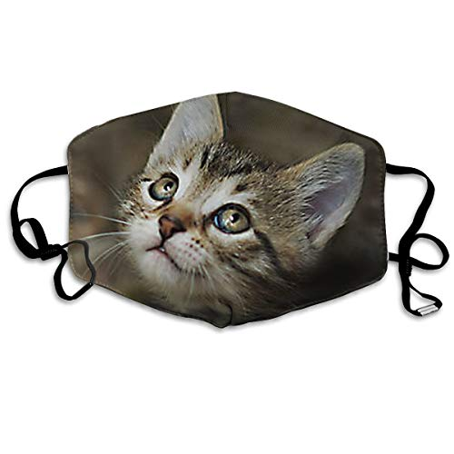(IEHFE MCNXB Tabby Cat Unisex Flu Dust Masks Reusable, Adjustable Ear Loops Breathable Mask for Outdoor Cycling Earloop Masks Pollen Germs Allergens Masks)