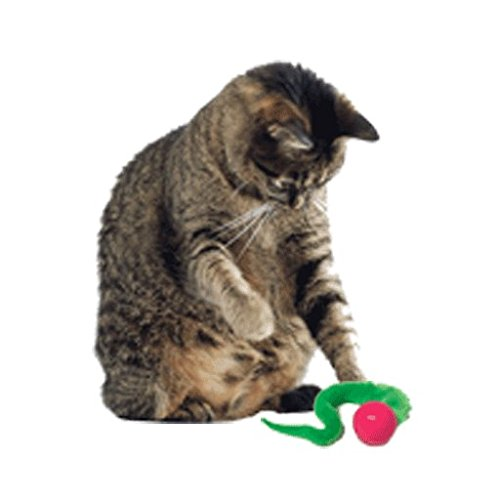 Dezi & Roo Wiggly Balls by Cat Toy Bouncing Ball Perfect for Cats of All Ages - 3 Pack by Dezi & Roo (Image #1)