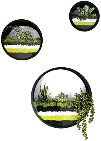 Best M Round Wall Hanging Plant Terrarium Iron Planter Wall Hanging Container Succulent Plant Pots Set of 3
