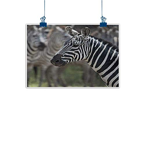 Outdoor Nature Inspiration Poster Wilderness African,Zebra in Serengati National Park Safari Animal in Desert Picture,Black White Reseda Green 20