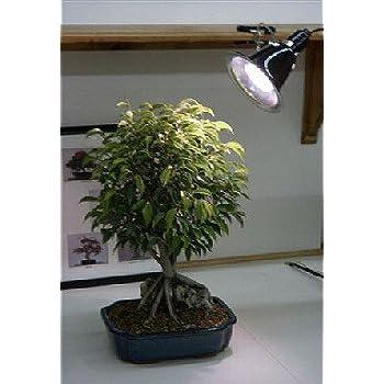 Amazon Com Hydrofarm Flf27d Desktop Plant Light With 27