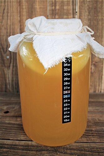 The Complete Kombucha Brewing Starter Kit: Live Organic Kombucha SCOBY- Fermented Starter Tea - Glass Brew Jar - Organic Sugar & Tea - Instructions & Recipes + More! by Fermentaholics (Image #2)
