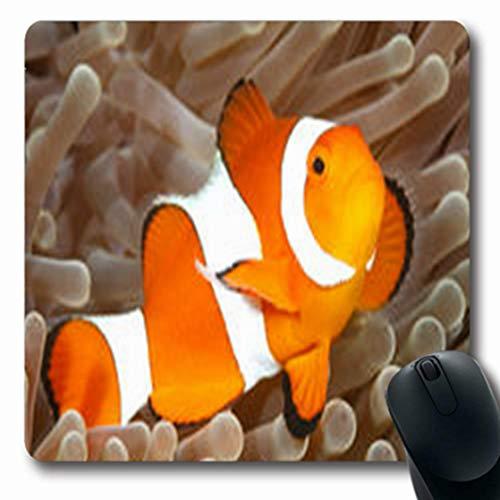 (Pandarllin Mousepads Bali Clown Anemonefish Amphiprion Percula Swimming Among Wildlife Oblong Shape 7.9 x 9.5 Inches Oblong Gaming Mouse Pad Non-Slip Rubber Mat)